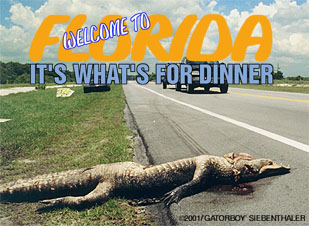 gator road kill on sr 520, June, 2000