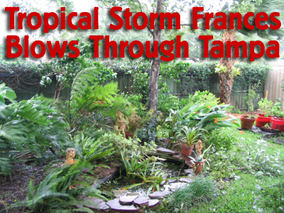 tropical storm francis blows through the tampa bay region